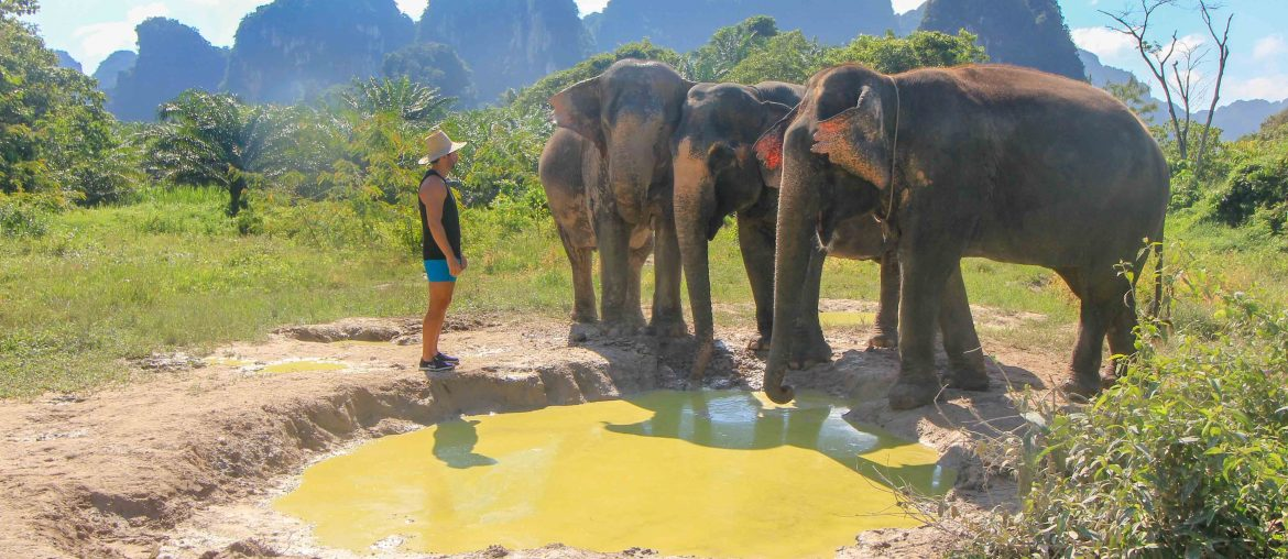 Krabi Elephant Sanctuary, Thailand, Feeding, Bathing, Washing Swimming,