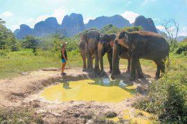Krabi Elephant Sanctuary, Thailand, Feeding, Bathing, Washing Swimming,