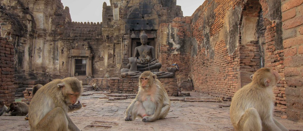 Monkey Temple, Lopburi, Thailand, Monkeys
