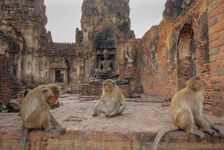 Affentempel, Lopburi, Affenstadt, Thailand, Affen