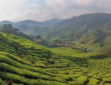 Bharat Tea Plantation, Cameron Highlands, Malaysia