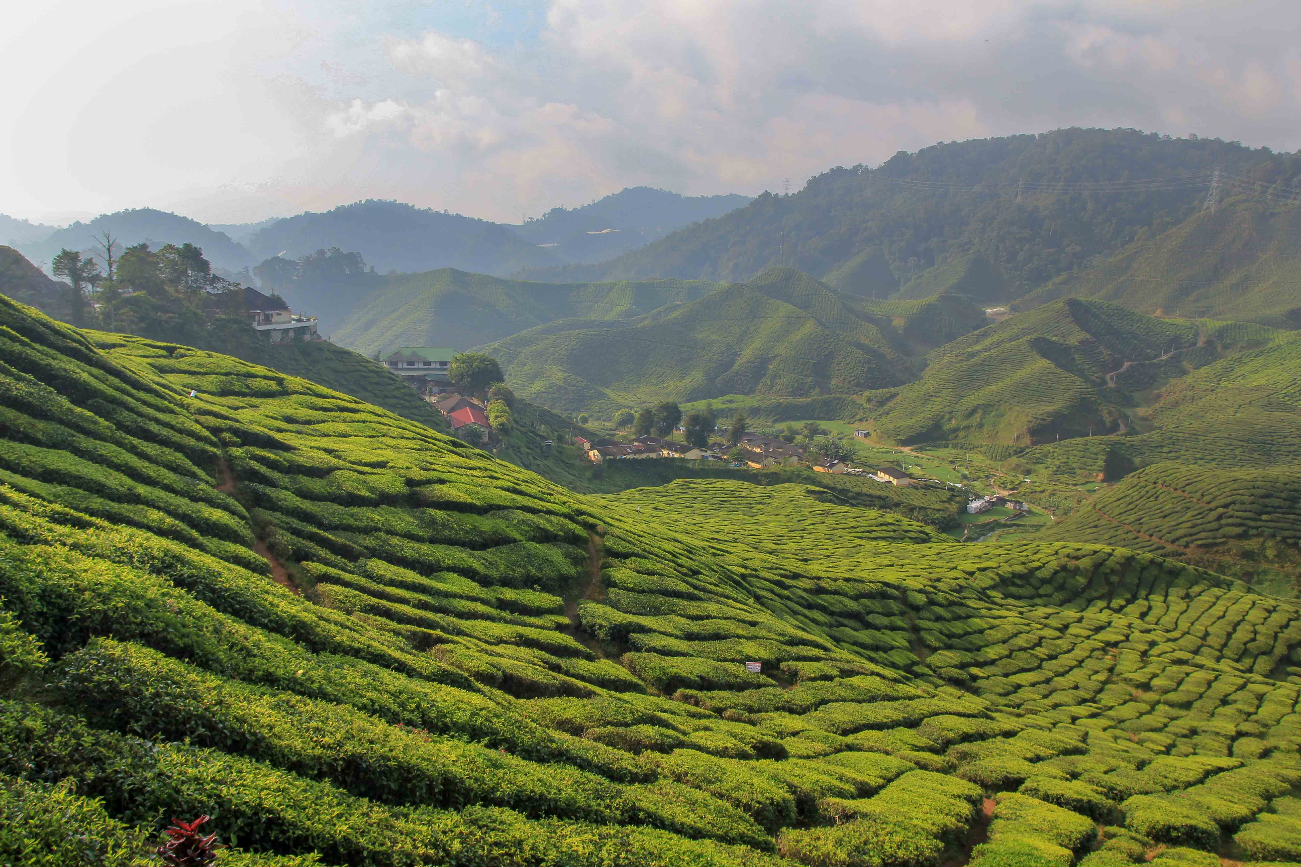 Cameron Highlands - The Best Attractions and Tours ...