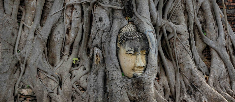 Wat Mahathat Ayutthaya, Buddha head in the tree